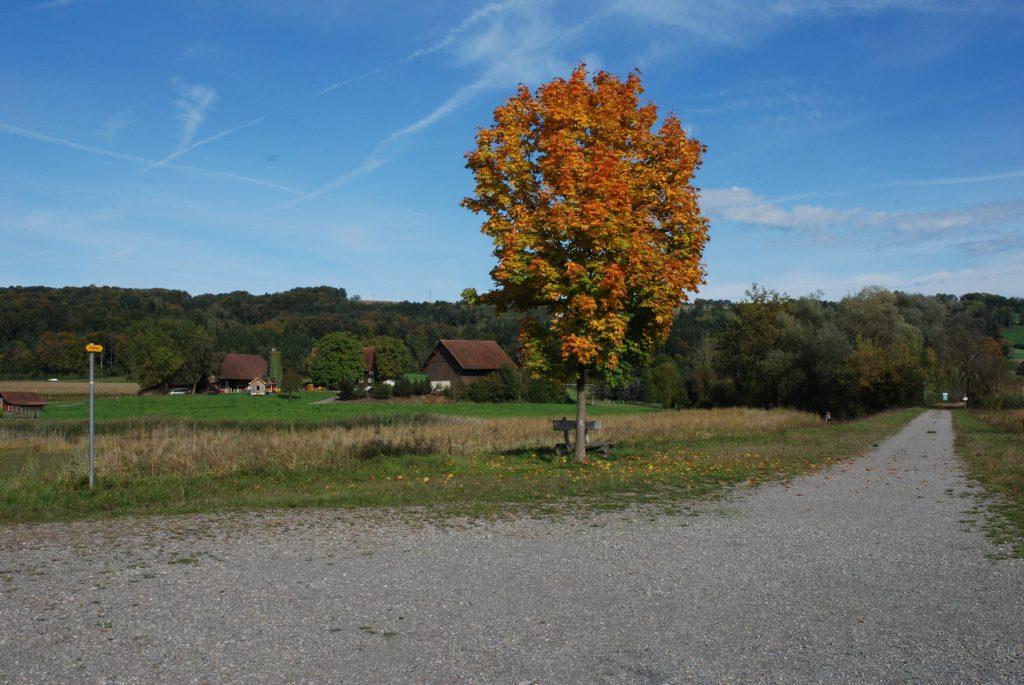 Herbststimmung am Flachsee