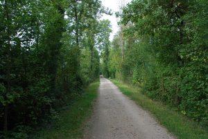 Waldweg Wildegg