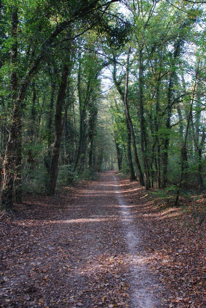 Waldweg in der Wöschnau