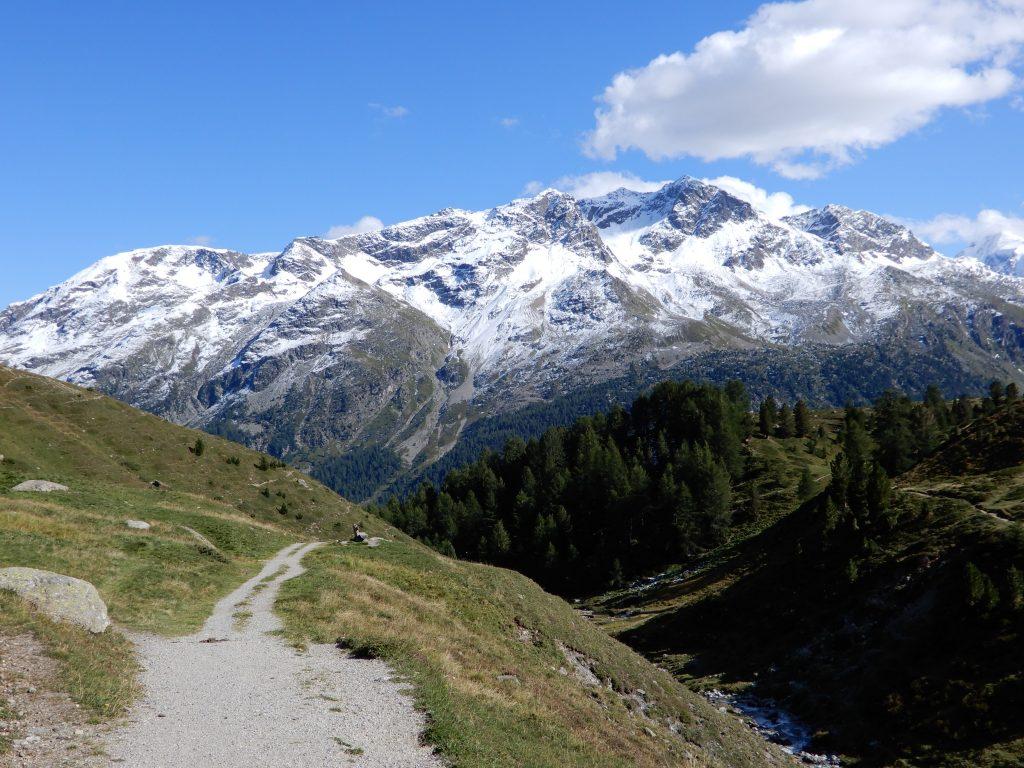 Blick von der Alp Suvretta auf den Piz Rosatsch