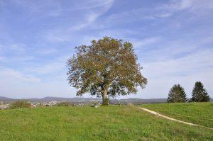 Auf dem Eschenberg