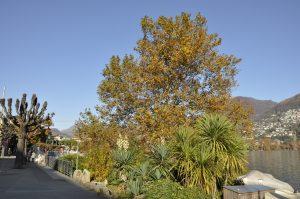 Herbst am Lido
