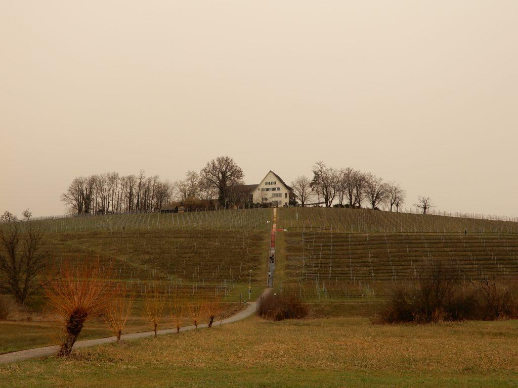 Weinberg auf der Halbinsel Au