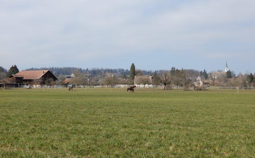 Pferdeweide bei Widmen