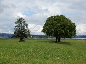 Blick zur Insel Ufenau